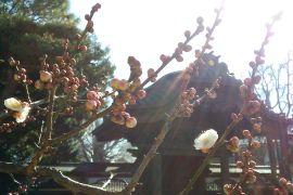 最近放生池でカワセミをよく見ます。